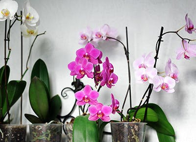 orchid care 400