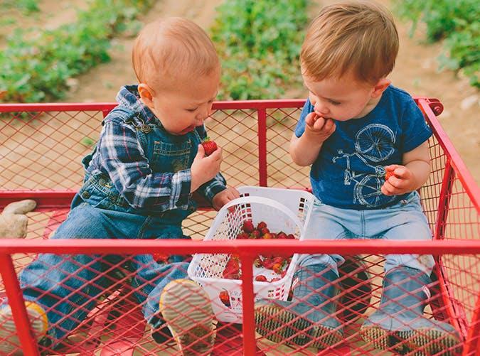summer kids berries
