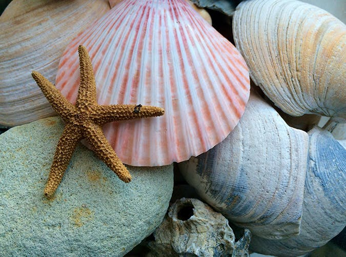 summer kids seashells