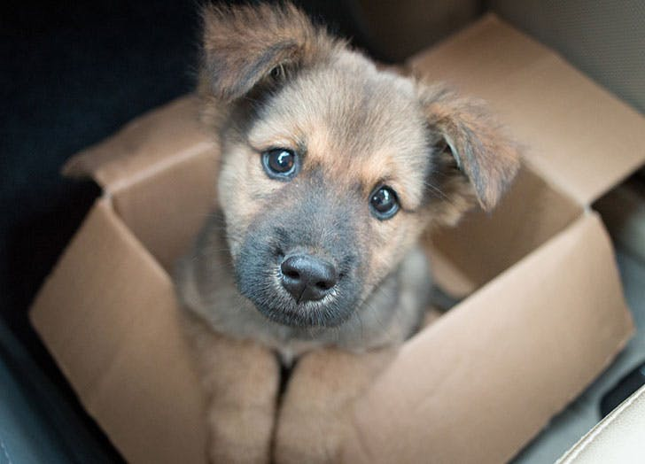 Adorable puppy in a cardboard box