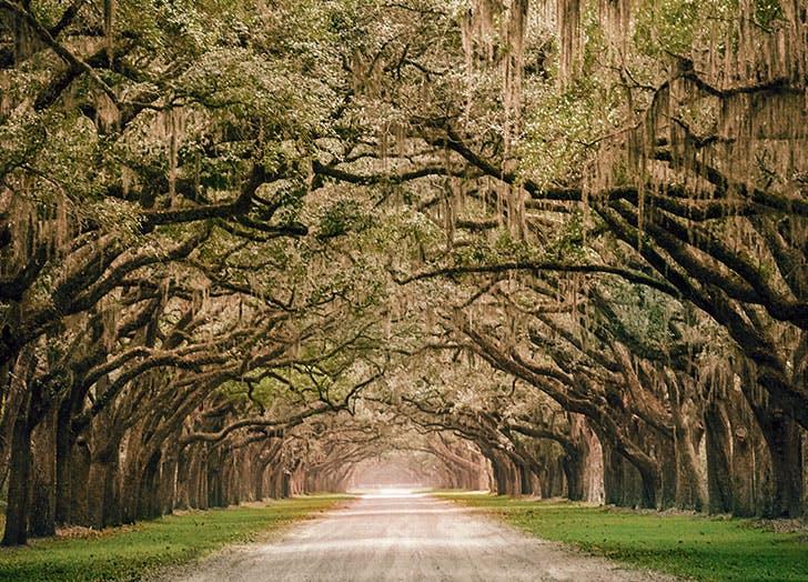 Beautiful trees in Savannah Georgia