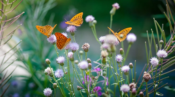 Delicieux How To Attract More Butterflies To Your Garden
