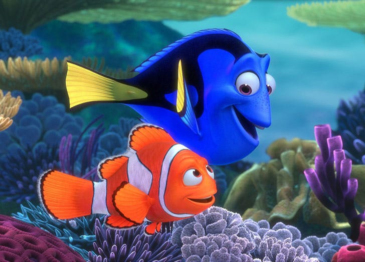 Finding Nemo clownfish swimming