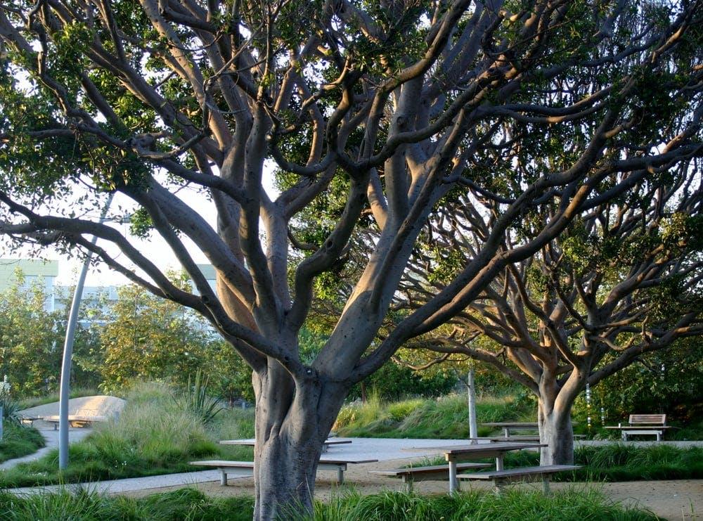 LA picnic spots tongva park