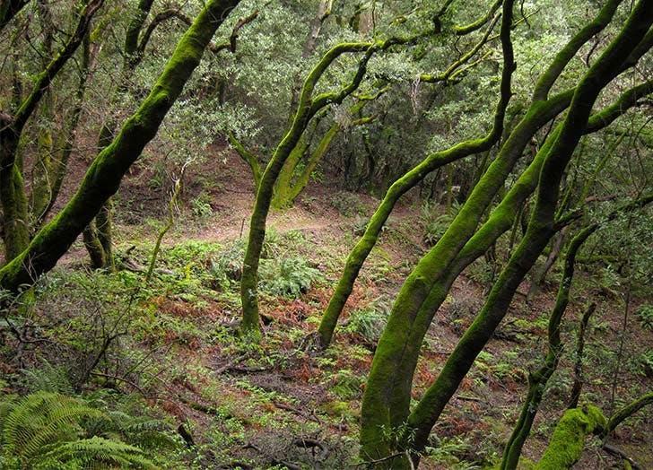 SF hikes french trail LIST