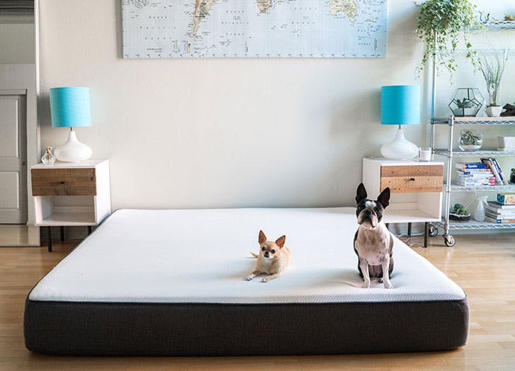 Two cute dogs sitting on mattress