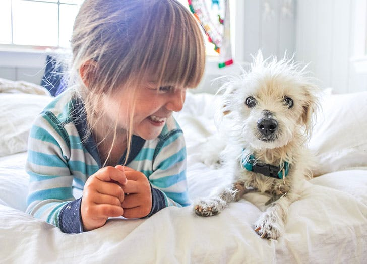 Young girl smiling at her Chinese Crested dog in bed