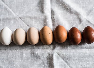 difference between brown and white eggs 400