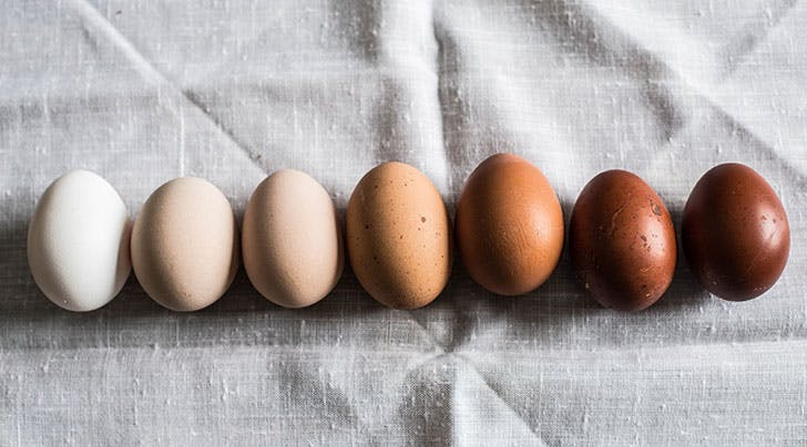 Whats the Difference Between Brown and White Eggs?