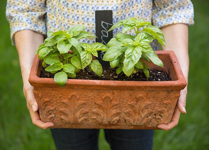 summer money grow herbs LIST