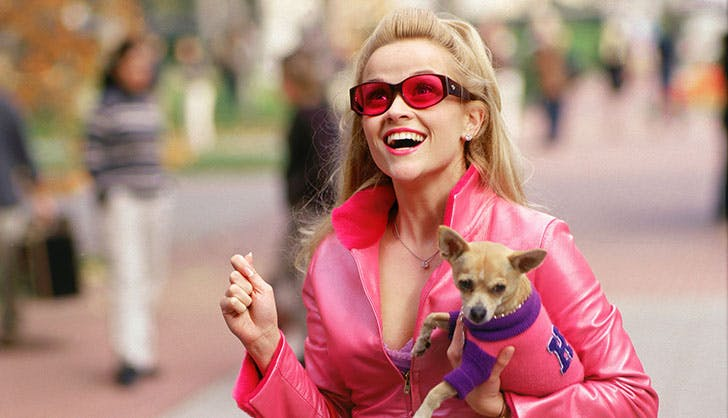 Best Dogs Bruiser Woods Legally Blonde