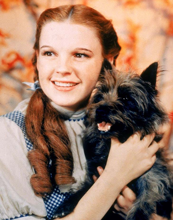 Best Dogs Toto The Wizard of Oz