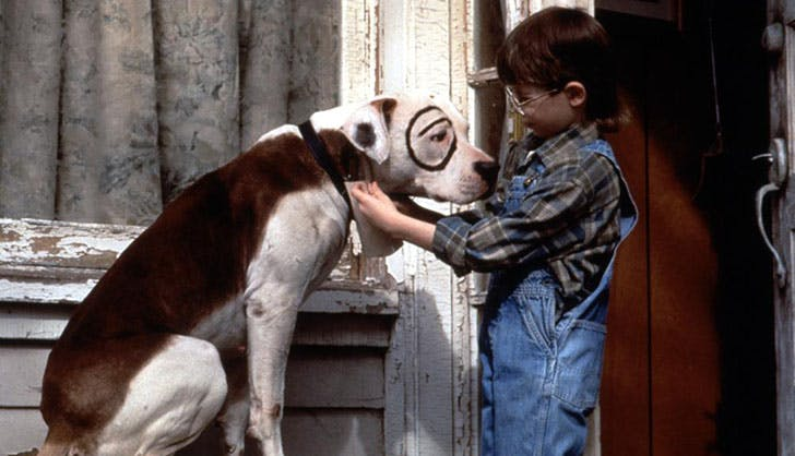 The Little Rascals Best Dogs Petey
