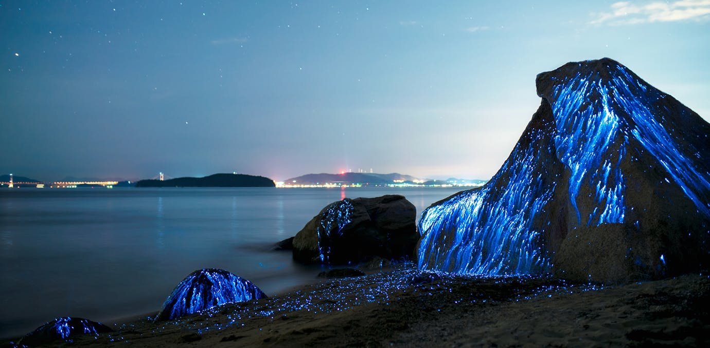 bioluminescent water 2
