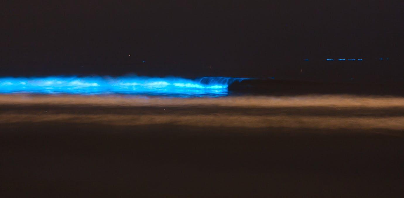 bioluminescent water 51