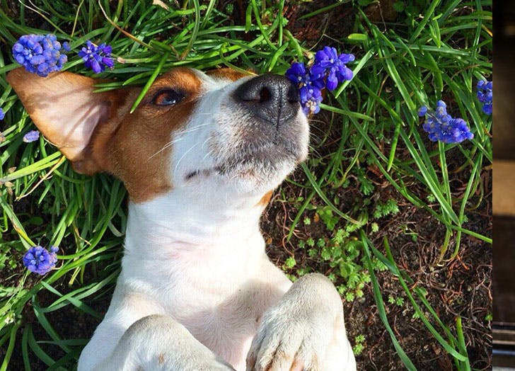 french dog flowers