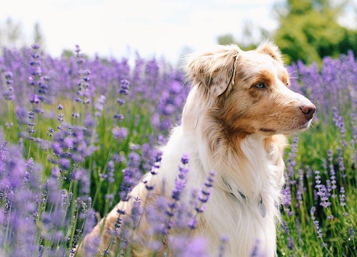 french dog garden