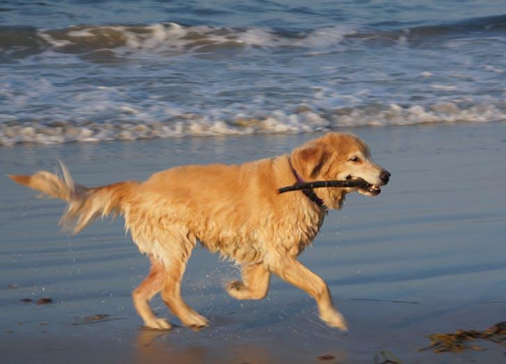 HAMP dog friendly beach LIST
