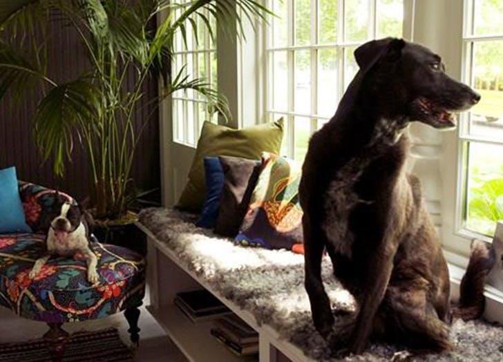 HAMP dog friendly list1