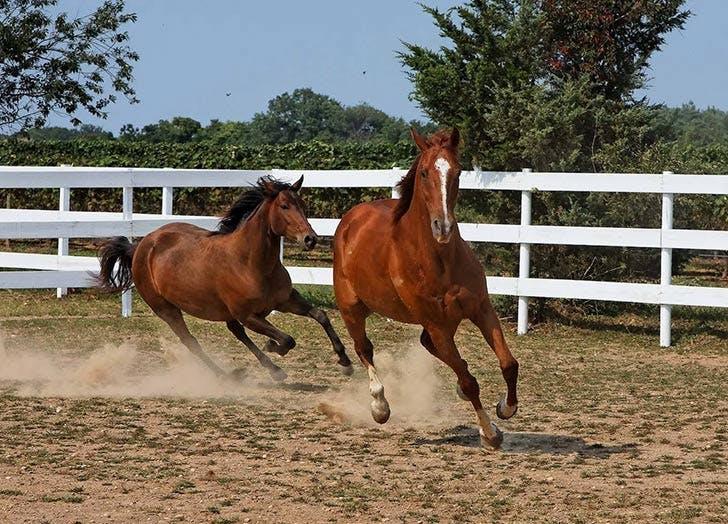 HAMP wineries horses list1