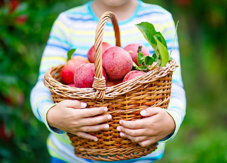 Kid holding basket of fall apples