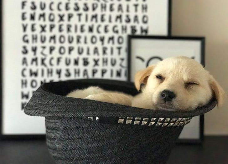 LA destress home sleepy puppy LIST