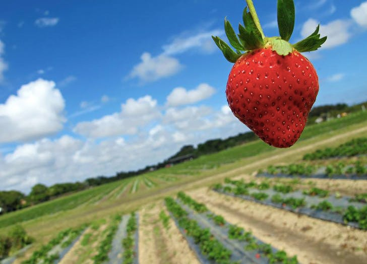 MIA fall things strawberry fields LIST