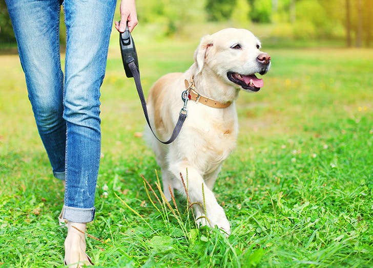Woman taking Golden Retriever for walk in the park
