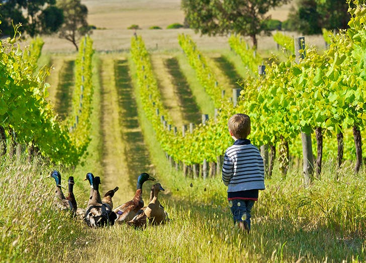 Young boy walking through vineyard