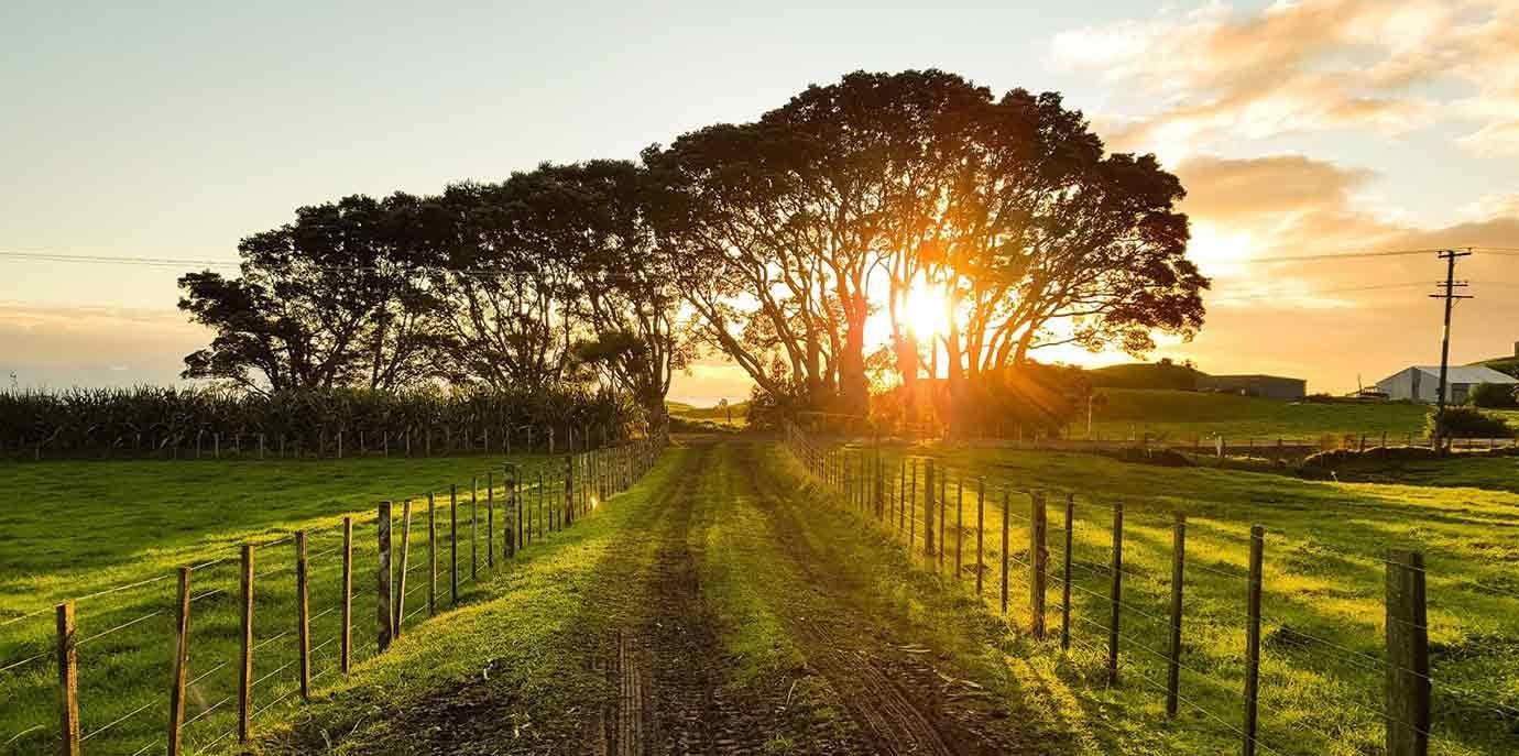 castoro vineyard 667