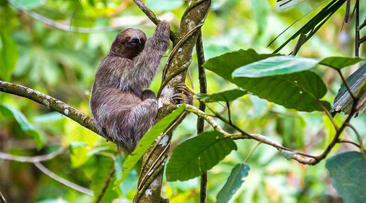 This Costa Rican Resort Just Opened a Sloth Sanctuary and We're Booking a Trip ASAP