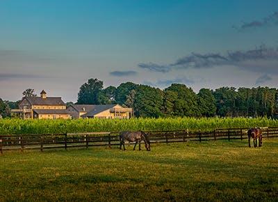 horse winery 290