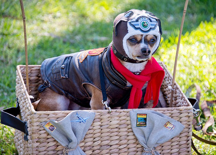 Airballoon pilot halloween dog costume