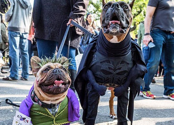 Batman and Joker Halloween costumes for dogs