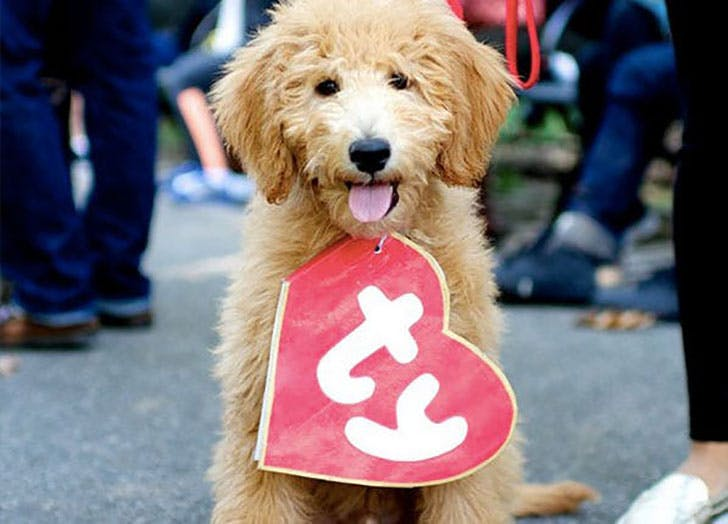 Beanie Baby dog costume for Halloween