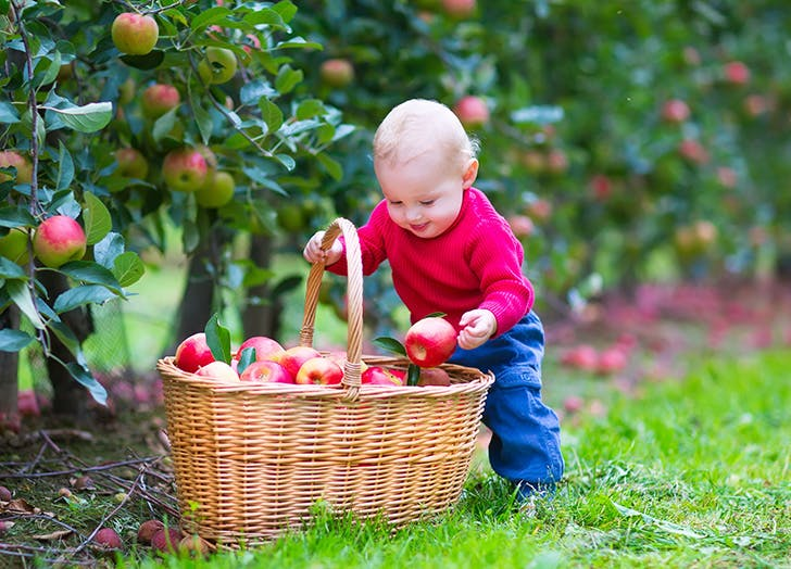 Cute baby boy picking apples in fall