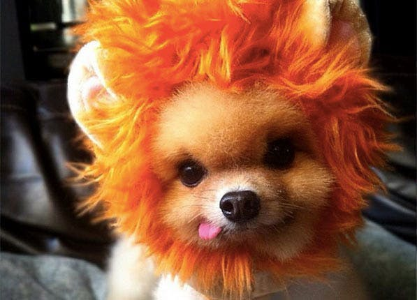 Cute lion cub Halloween costume for dog
