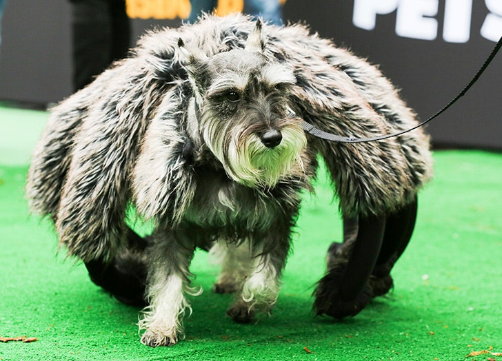 The 38 Best Halloween Costumes For Dogs In 2017 Purewow & Halloween Dog Spider Costume - Meningrey