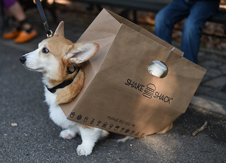 Dog dressed up in Shake Shack costume