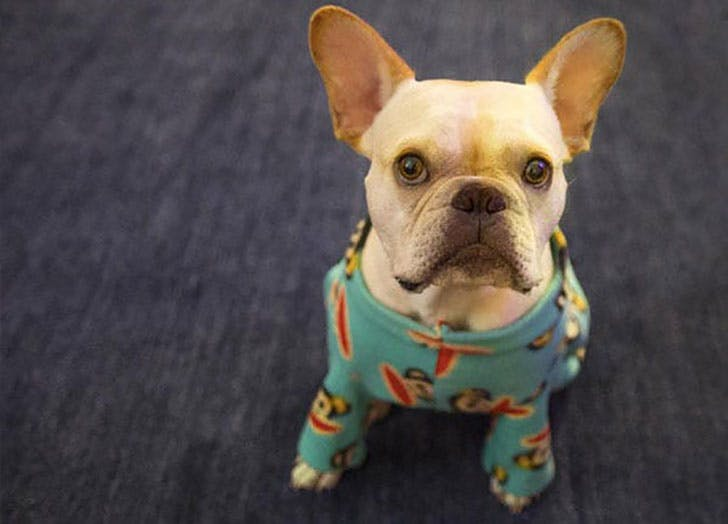 Dog in pajamas costume for Halloween