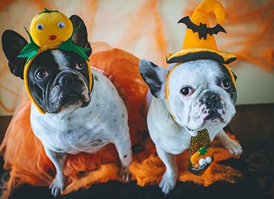 Dogs dressed up for Halloween 400