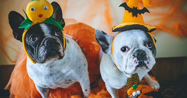 The 38 Best Dog Halloween Costumes of All Time