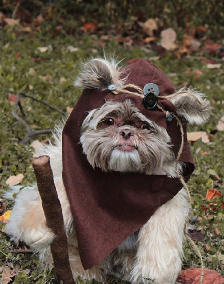 Ewok Star Wars Halloween costume for dogs