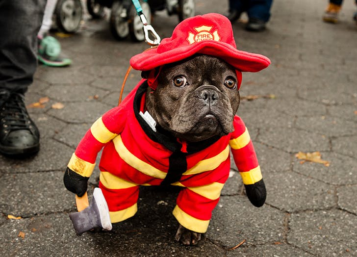 Firefighter Halloween dog costume