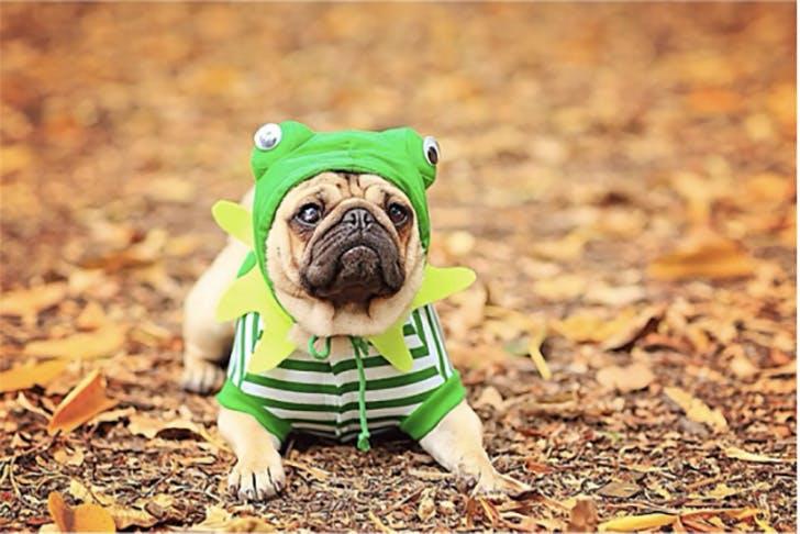 Frog Dog for Halloween