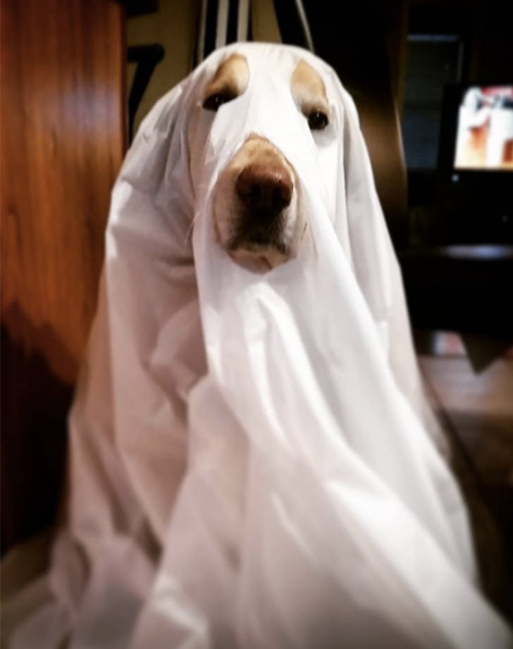 Ghost bedsheet Halloween costume for dogs
