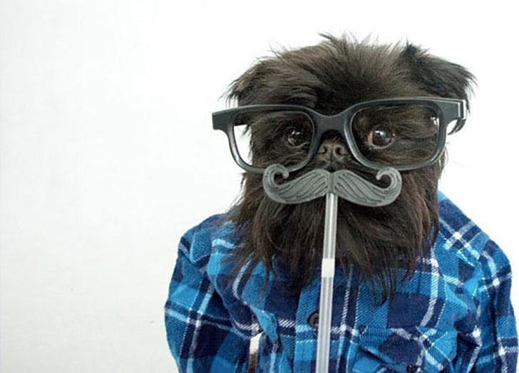 Hipter dog Halloween costume idea