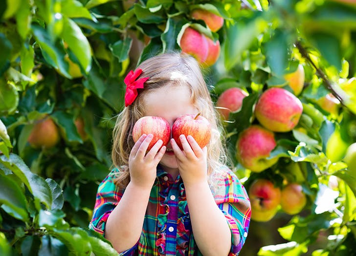 Little girl holding apples in front of her face