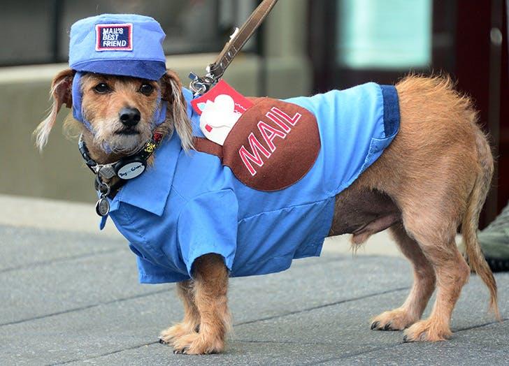 mailman halloween dog costume