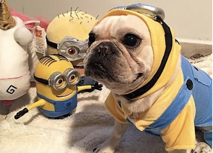 Minion Halloween dog costume